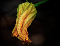 The humble beauty of some courgette flowers...