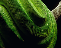 Procedural Snakes | Blender Material Study