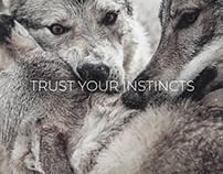 SIMPLY WILD // TRUST YOUR INSTINCTS