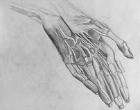 Gross Anatomy Sketches
