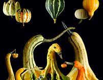 Meet the Gourds