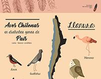 Lámina - Aves Chilenas