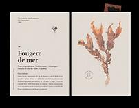 Edition — AVABAR, seaweed herbarium.