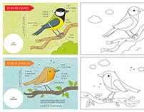Malbuch Vögel im Garten.