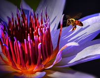 The Lily and the Bee