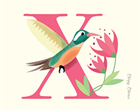 The Xantus Hummingbird