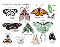 Lepidopterology Illustration