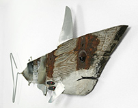 Shabby Shark