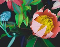 King Protea Paper Flower