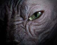 The Disturbing Beauty of Sphynx Cats