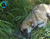 Ölüme Yatmış Köpek - Dost Derneği