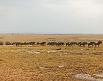 Masai Mara/Part 1
