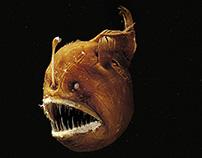Veja News - Fish