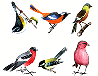 Birds. Watercolor illustrations.