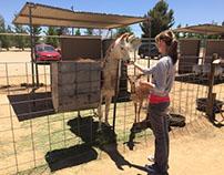 Stephanie Taunton | Hesperia Zoo Animal Trainer