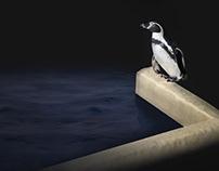 Penguin's delight