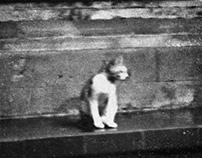 Cat Series #1-4