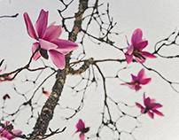 magnolia wakes