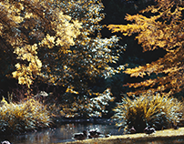 Jardin Botanique - Tours