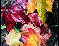 iPhone Autumn