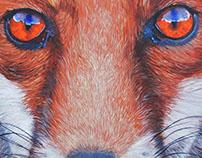 Fox - 2016