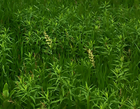 McHenry County Grassland Habitats