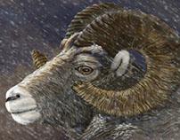 Bighorn in Snowstorm