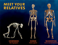 Meet the Relatives