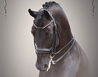 Equine Art: sporthorse portraits