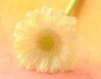 Poetic flower 2