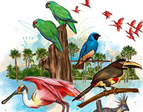 AVES / BIRDS CASANARE - Illustration