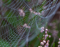 Autumn Spider Webs