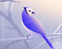 North American Blue Jay