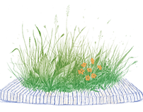Various editorial illustrations
