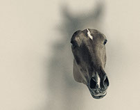 Focus Horse