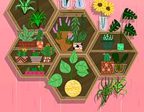 Plants on Shelves - July 2018