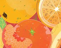 Fruits n' seeds illustrations