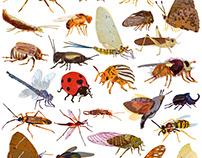 insect alphabet - Papperlapapp