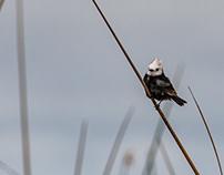 Argentina, Ibera, Birds