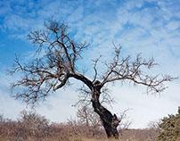 Oak scenes...