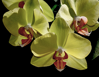 Orchids' frenzy...
