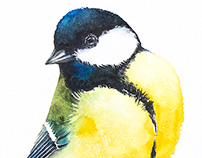 Tits (birds) watercolours illustrations