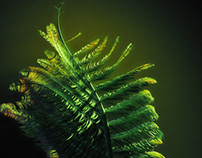 Fern Grow Animation R&D