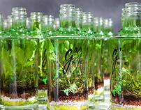 Bottle Plant | g'vine
