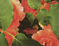 Flowers Pt. IX