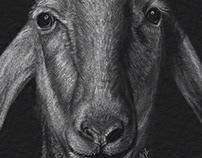 Animal portraits - sheep