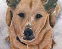 Pet portrait - Winnie