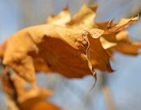 nature photo