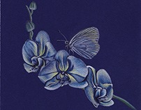 Yellow Blue Orchid Butterfly Drawing Art