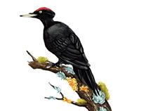 Bird calendar 2018